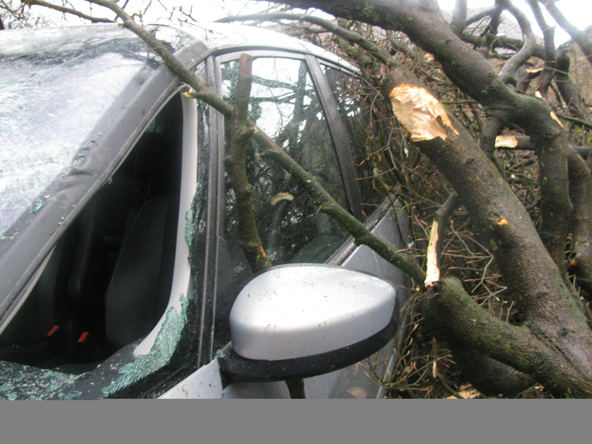 Jimmy Cricket's car was damaged by a falling tree